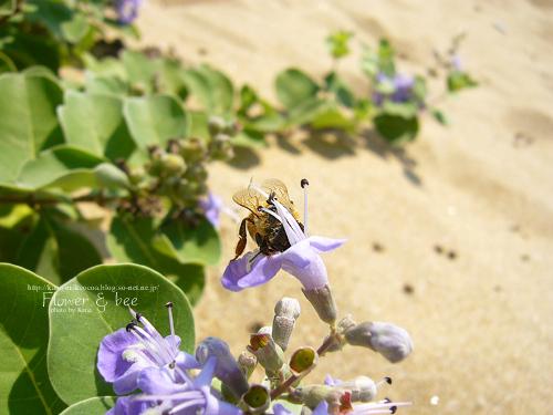 ハチさん発見
